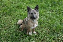 Retrato de um cão Fotografia de Stock