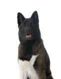 Retrato de um cão Imagem de Stock Royalty Free