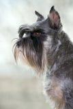Retrato de um cão Imagens de Stock
