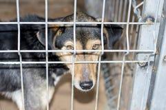 Retrato de um cão atrás das gaiolas das barras imagens de stock royalty free