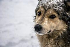 Retrato de um cão bonito com os olhos tristes amáveis imagem de stock