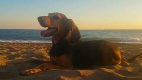 Retrato de um cão bonito contra o mar no por do sol vídeos de arquivo