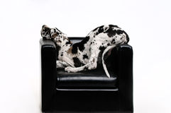 Retrato de um cão bonito em um fundo branco foto de stock royalty free