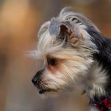Retrato de um cão bonito no perfil imagens de stock royalty free