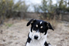 Retrato de um cão disperso Imagem de Stock Royalty Free