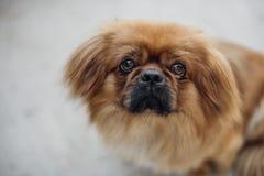 Retrato de um cão doce fotografia de stock