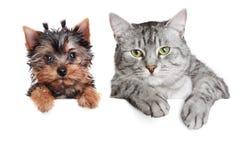 Retrato de um cão e de um gato Fotografia de Stock