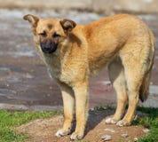 Retrato de um cão na tarde imagem de stock