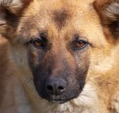 Retrato de um cão na tarde imagem de stock royalty free