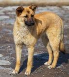 Retrato de um cão na tarde foto de stock royalty free