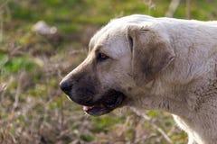 Retrato de um cão na tarde fotografia de stock
