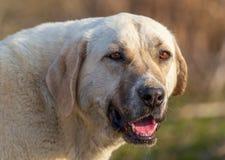 Retrato de um cão na tarde imagens de stock