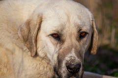 Retrato de um cão na tarde imagens de stock royalty free