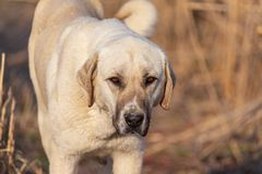 Retrato de um cão na tarde fotografia de stock royalty free