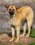 Retrato de um cão na tarde foto de stock