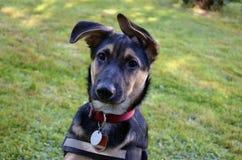Retrato de um cão novo fotos de stock royalty free