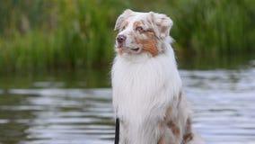Retrato de um cão perto do lugar da água video estoque