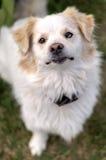 Retrato de um cão que senta-se na grama Imagem de Stock Royalty Free