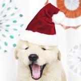 Retrato de um cachorrinho bonito do golden retriever que veste um chapéu de Santa foto de stock royalty free