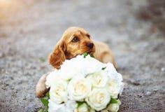 Retrato de um cachorrinho pequeno imagem de stock royalty free