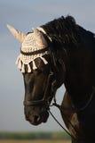 Retrato de um cavalo. Fotografia de Stock Royalty Free