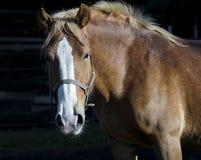 retrato de um cavalo brilhante grande com uma juba leve em um fundo escuro foto de stock