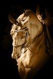 Retrato de um cavalo do adestramento do esporte Imagem de Stock