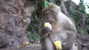 Retrato de um close-up do macaco fora vídeos de arquivo
