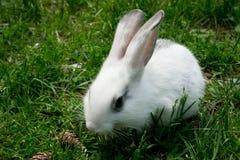 Retrato de um coelho e de cones Fotografia de Stock Royalty Free