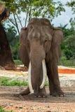 Retrato de um elefante bonito fotos de stock royalty free