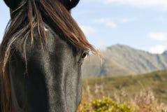 Retrato de um fim do cavalo acima Fotos de Stock