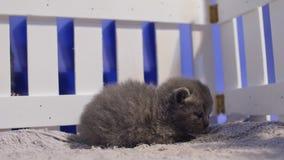Retrato de um gatinho bonito, cerca de madeira filme