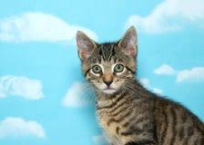 Retrato de um gatinho do gato malhado, fundo do céu azul foto de stock royalty free
