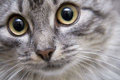 Retrato de um gato Foto de Stock
