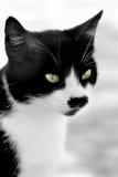 Retrato de um gato imagens de stock royalty free