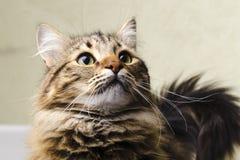 Retrato de um gato bonito Foto de Stock