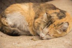 Retrato de um gato bonito do gengibre que descansa sob um arbusto no g Foto de Stock