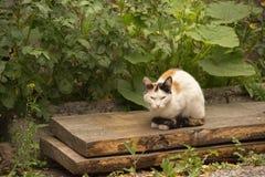 Retrato de um gato bonito do gengibre que descansa sob um arbusto no g Imagem de Stock Royalty Free