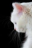 Retrato de um gato branco imagem de stock