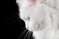 Retrato de um gato branco imagem de stock royalty free