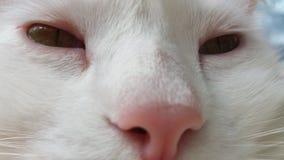 Retrato de um gato branco, close up fotografia fotografia de stock
