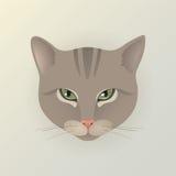 Retrato de um gato da senhora Fotos de Stock
