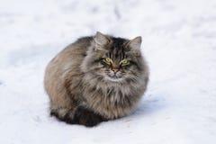 Retrato de um gato de gato malhado Imagens de Stock