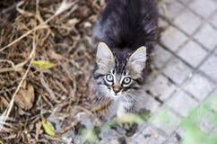 Retrato de um gato de gato malhado do bebê que olha acima exterior Fotos de Stock Royalty Free