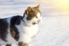 Retrato de um gato doméstico fotos de stock royalty free