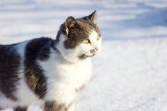 Retrato de um gato doméstico imagem de stock royalty free