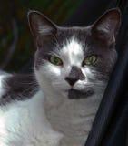 Retrato de um gato doméstico foto de stock