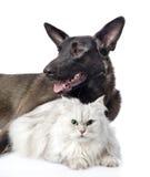 retrato de um gato e de um cão No fundo branco Imagens de Stock