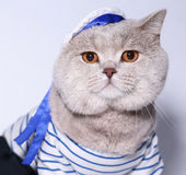 Retrato de um gato em um terno do marinheiro. Fotos de Stock Royalty Free