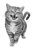 Retrato de um gato engraçado bonito Foto de Stock